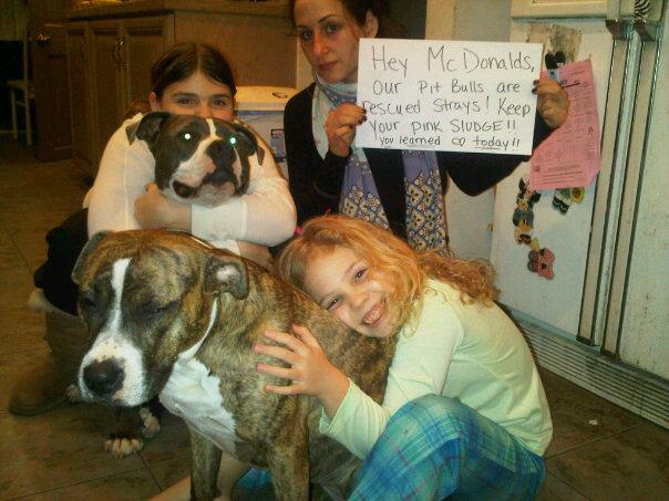 persasive essay example about pit bulls